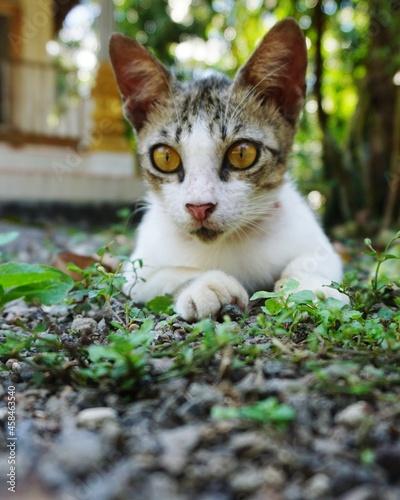 Fototapeta Portrait Of Cat In The Yard