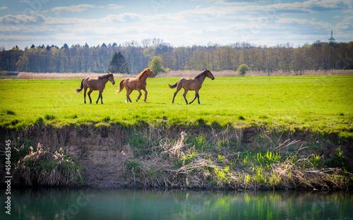 Obraz na plátně Horses In A Field At A River