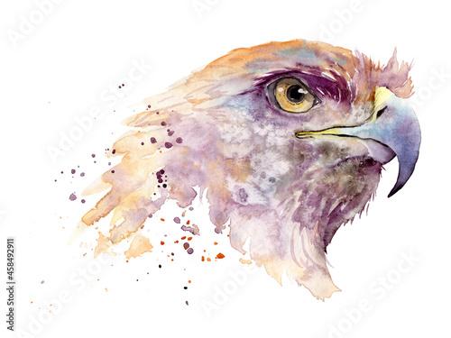 Fotografia, Obraz watercolor drawing of a bird - golden eagle