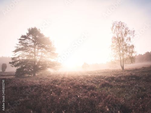 Fotografie, Obraz In Wald und Heide