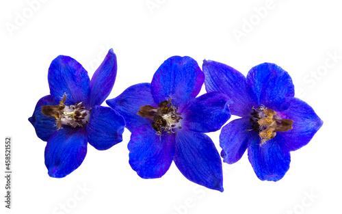 Foto blue delphinium flower isolated