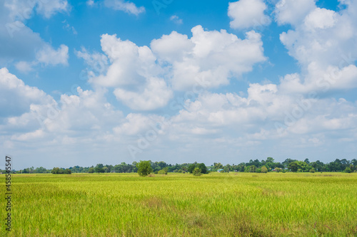 Fototapeta Abundance paddy field or rice field with white clouds and clear blue bright sky