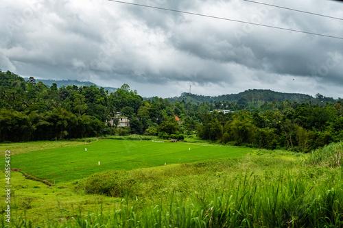 Fotografie, Obraz Landscape of green rice paddy field under a cloudy sky