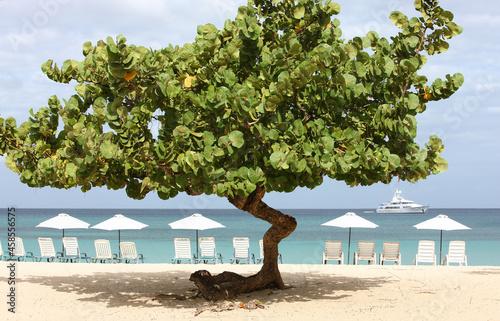 Fotografie, Obraz Sea Grape trees on a beach with loungers