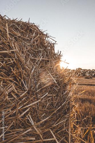 Fototapeta Field of hay rolls in sunset