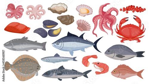 Obraz na plátně Fresh raw ocean and sea fish, tuna, salmon and herring