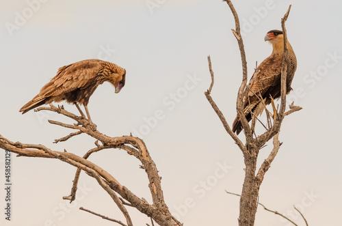 Carta da parati Aves