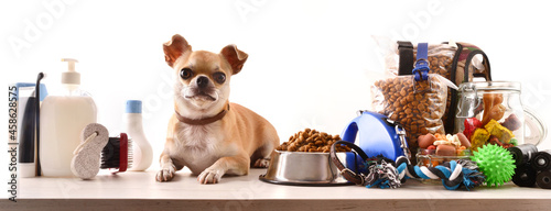Food and accessories for the dog and chihuahua on table