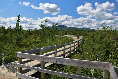 Fotografie, Obraz Cherry River wooden boardwalk across marshland