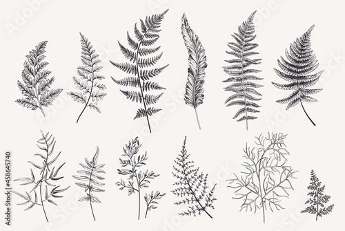 Fotografie, Obraz Set with fern leaves