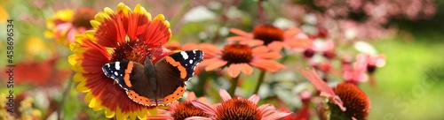 Obraz na plátně Schmetterling 878