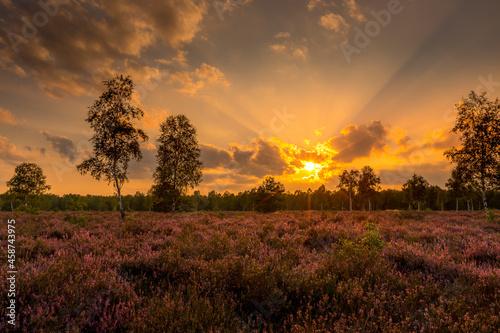 Wrzosowisko zachód słońca