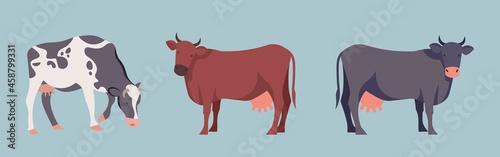 Fényképezés Set of stickers with cows