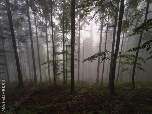 Tela Forest in the fog - Babia Gora Mountain - Beskidy Mountains