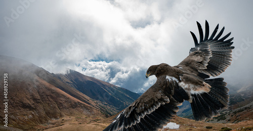 Fotografiet An eagle flying high over a mountain landscape under a cloudy sky