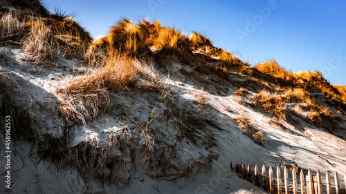 Fotografie, Obraz Herbes sèches dans les dunes