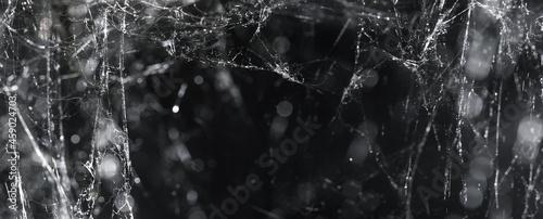 Fotografie, Obraz Mess of cobwebs or spiderwebs on black