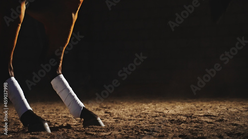 Fotografie, Tablou in the darkness on the ground, a horse raised on its hind legs