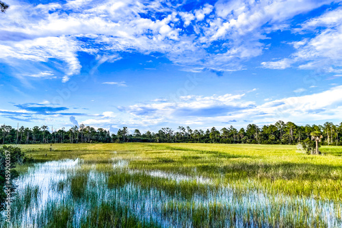 Fotografie, Obraz marsh and river grass in the swamps of Louisiana