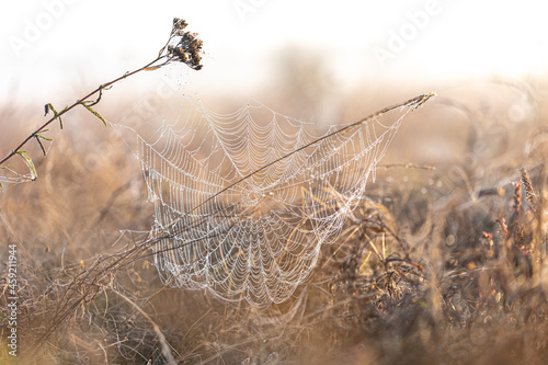 Canvas Print Big beautiful spider web in dew drops at dawn in the field.