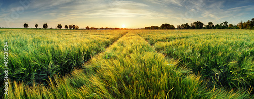 Foto Rural landscape with wheat field on sunset