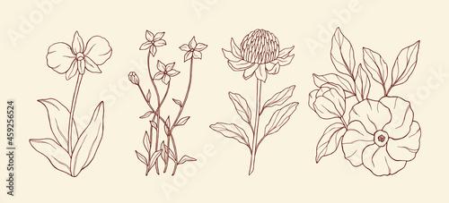 Obraz na plátně Line art Australian native flowers