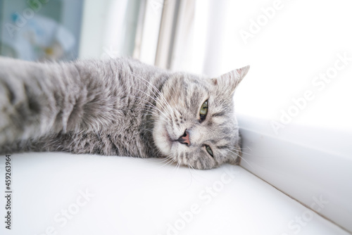 Photo sleepy mongrel cat with funny emotions and a suspicious look
