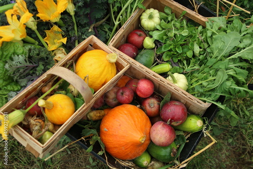 jarzyny dynie kabaczki plony jesień warzywa
