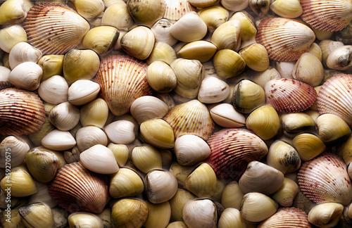 Photographie Fundo de cena de Moluscos em Conchas
