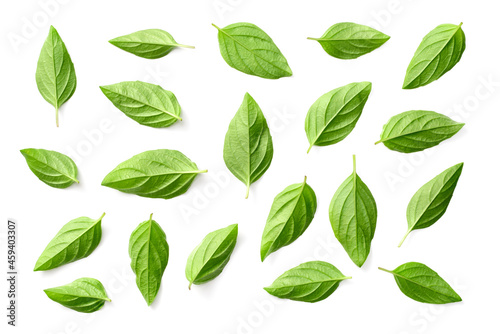 fresh Thai Basil leaves isolated on white background