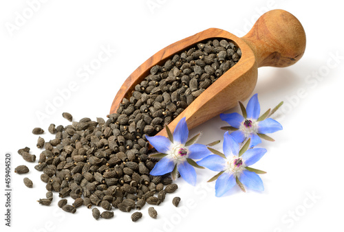 Fototapeta dried borage seeds in the wooden scoop, with fresh flowers, isolated on white ba