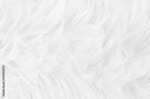 Billede på lærred Beautiful white grey bird feathers pattern texture background.