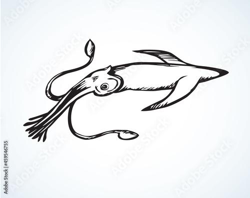 Foto Squid. Vector drawing