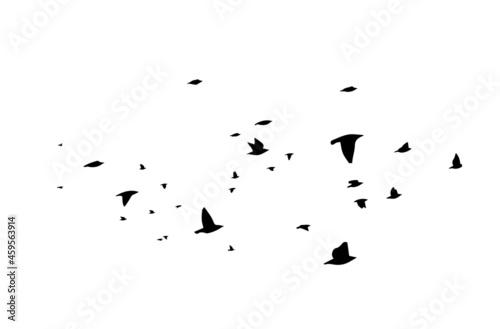 Fotografia A large flock of flying birds. Free birds. Vector illustration