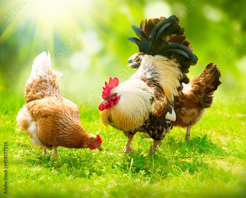 Canvastavla chicken