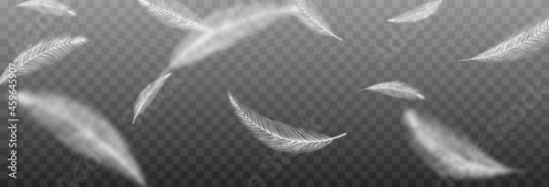 Fotografiet Vector feathers on an isolated transparent background