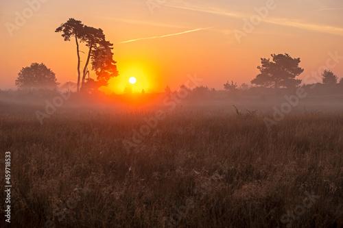 Fototapeta Sunrise in the National Park De Hoge Veluwe in the Netherlands