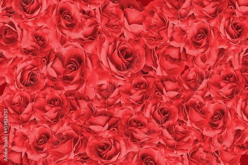 真っ赤な薔薇のフレーム、ローズ、バラの花/真紅のばらのデコレーション背景画像/カード、タイトルスペース Fototapete