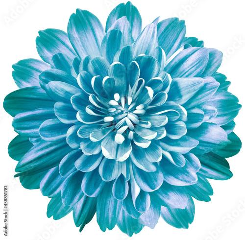 Murais de parede flower blue chrysanthemum