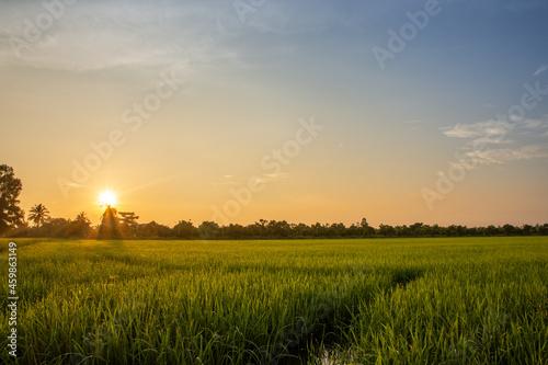 Obraz na plátně Sunrise in the rice field
