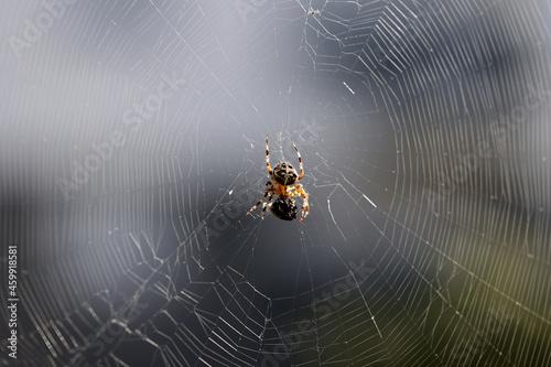Slika na platnu Pająk plecie sieć do łapania owadów