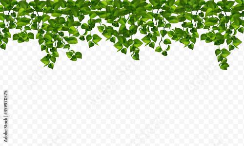 Fotografia House Realistic Plants