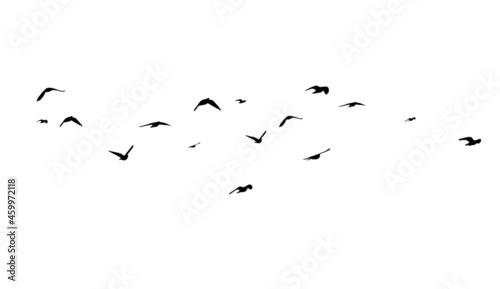Photo A large flock of flying birds. Free birds. Vector illustration