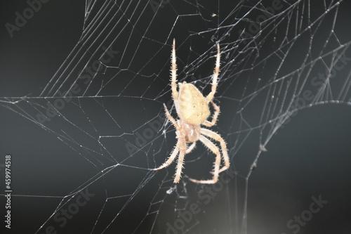 Fotografija araignée