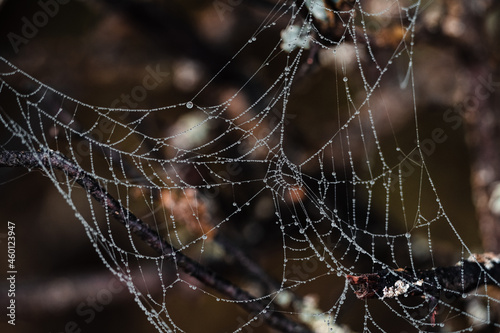 Canvastavla Spider web, plants and dew drops close-up. Abstract background