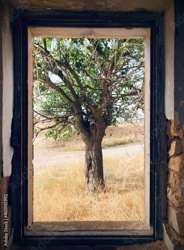 Obraz na plátně Ventana