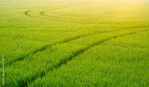 Fotografie, Obraz Morning soft sunlight on surface of curve track line of spraying tractor after s