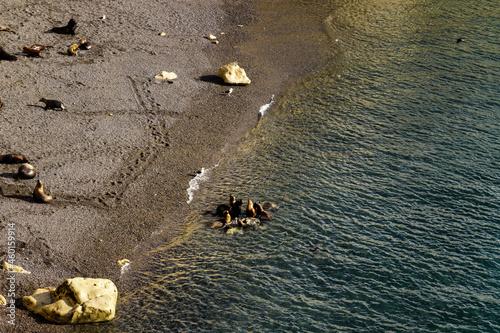 Fototapeta Aerial view of sea lion colony near Puerto Madryn, Argentina