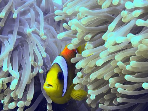 Billede på lærred fish on reef