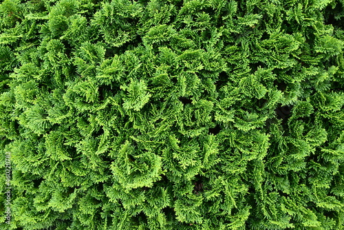 Obraz na plátne 枝先の模様が美しい植物のクローズアップ
